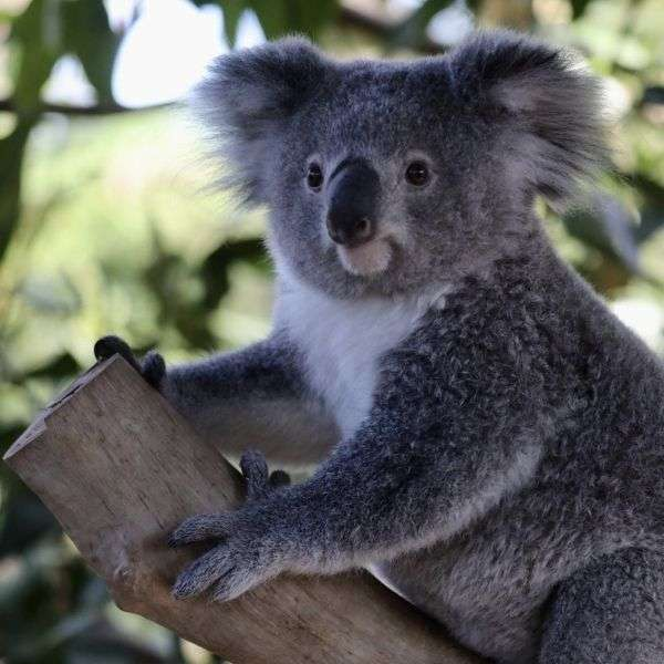 A perfect friend and family experience and get up close to your favourite Koala or hand feed a kangaroo at the Hunter Valley zoo.